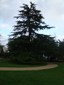 South Park Gardens Wimbledon Trees