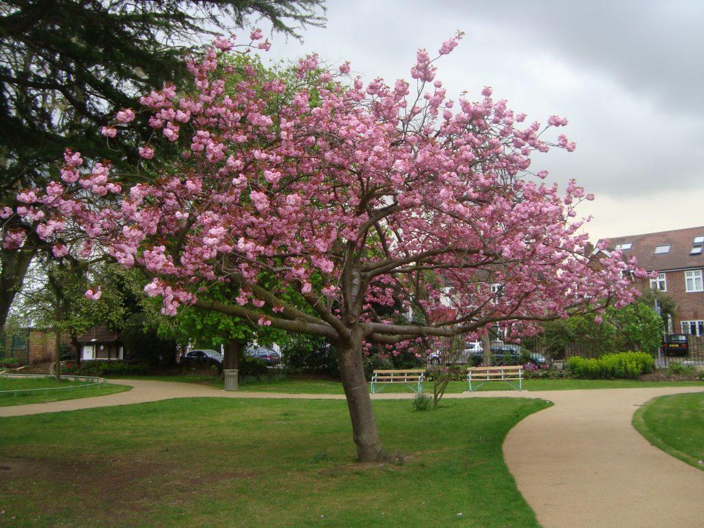 South Park Gardens Wimbledon