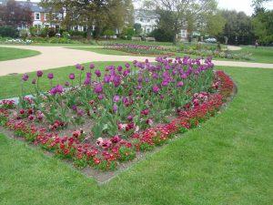 South Park Gardens Wimbledon Flower Bed